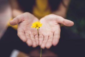 手のひらに花が一輪の画像